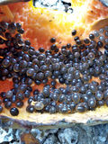 seed Fotografering för Bildbyråer