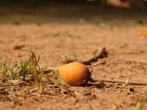 seed Stockfoto
