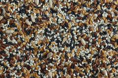 Seed background royalty free stock photo