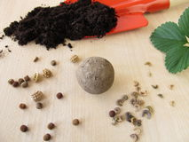 Seed ball Royalty Free Stock Image