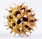 Seed Stock Photography