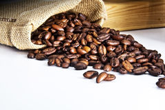 Seed of coffee Stock Image