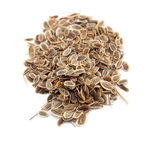 Seed of dill Stock Photo