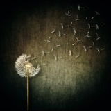 Seed escape. A lot of seeds escape from a dandelion flower on a gray backround. Breaking free, life journey concept royalty free stock photography