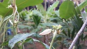 Seed farming kerala stock image