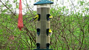 Seed feeder visits by birds Stock Photos