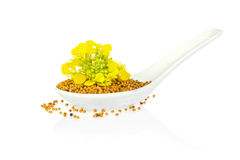 Seed and flower of mustard   in porcelain spoon Stock Photos