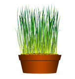 Seed in flowerpot grass stock illustration