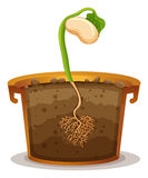 Seed germination in clay pot Stock Photography