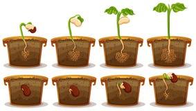 Seed germination in claypot Stock Photo