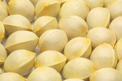 Seed of ginkgo Royalty Free Stock Images