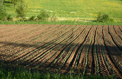 Seed and grow. Row of seedlings stock photos