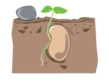 Seed growth. Illustration of a spouting seed stock illustration
