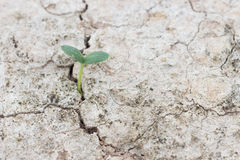 Seed growth on crevice  soil spring season Stock Images