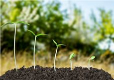 Seed Growth Stock Photos