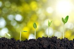 Seed growth. Seeding plant step sprout new green Royalty Free Stock Photo