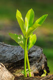 Seed growth seedling. Green sprout growing from seed nature Royalty Free Stock Photos