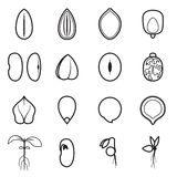 Seed icon set, which represents the most common types of crop seeds. Such as beans, buckwheat, wheat, sunflower, pumpkin, castor, soy, etc. Vector illustration royalty free illustration