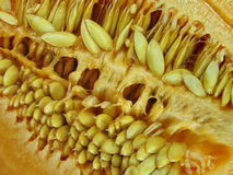 Seed of melon close-up Royalty Free Stock Image