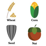 Seed nut corn wheat collection Royalty Free Stock Photography