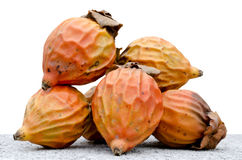 Seed of oil palm. Seed of  palm with white background Royalty Free Stock Image