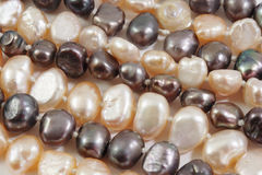 Seed pearl close-up Stock Images