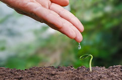 Seed and planting concept with hand watering Royalty Free Stock Images