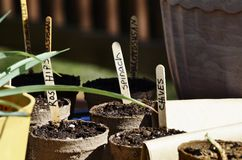 Seed plantings. Propagation of seed in biodegradable pots Royalty Free Stock Photography