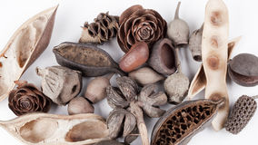 Seed pod Stock Images