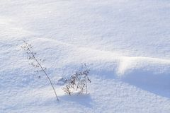 Seed pods in winter snow. Stock Image