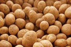 Seed Potatoes. Some already sprouting, and ready to be planted in the Spring royalty free stock photos