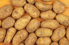 Seed potatoes Royalty Free Stock Images