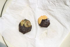 Seed rot disease Stock Photos