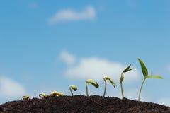 Seed row growing on soil Stock Photos