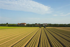 Seed rows Stock Images