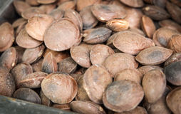 Seed sacha inchi. The seed sacha inchi peanut royalty free stock images