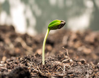 Seed on soil Royalty Free Stock Photos
