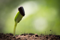 Seed on soil new life start concept Stock Photo