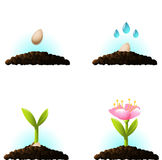 Seed sprout. Vector icons Stock Photography