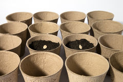 Seed Starting Pots Royalty Free Stock Photography