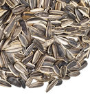 Seed of sunflower. Close-up view of sunflower seeds Royalty Free Stock Photo