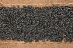 Seed sunflower  lying on sackcloth between the lines Stock Image