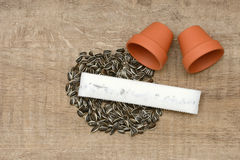 Seed tape Royalty Free Stock Image