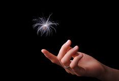 Seed to hand. Seed with parachute falling onto hand over black background Royalty Free Stock Photography