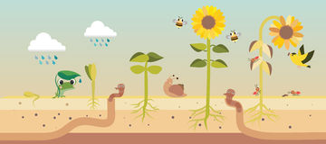 From seed to seed plant growth proccess royalty free illustration