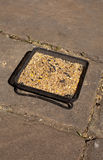Seed Tray Royalty Free Stock Image