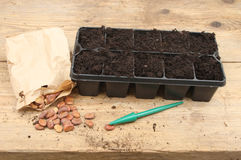 Seed tray and seeds Stock Photos