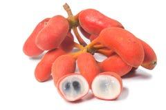 Seed of Uvaria rufa Blume fruit(Carabao teats. ), Herb rare in east of Thailand Stock Photos