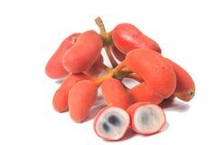 Seed of Uvaria rufa Blume fruit(Carabao teats Stock Photography