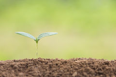 Seed young plant on soil in morning Stock Images